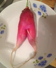 胡萝卜也分男女