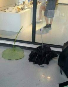 这谁的雨伞啊?太环保了吧