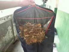 晒了一个月的裤子,发现鸟都来做窝了!