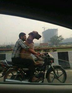 和主人一起骑车兜风最开心了呢汪哈哈
