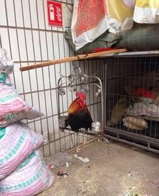 喂!老纸是鸡不是鸟啊!