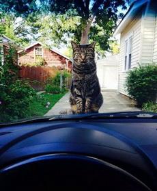 你赶紧给本喵下车,陪我玩