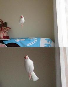 空中芭蕾舞者,已醉倒在那白色礼服下