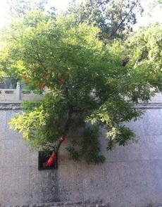 觉得这棵树充满了故事