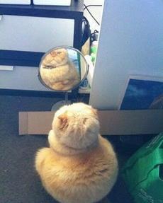一定是镜子坏掉了