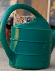我躲好了,你可以來找了。
