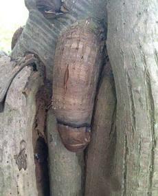這棵樹長得可真標致呀