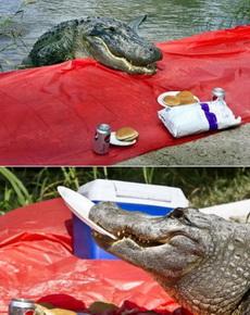 野餐不挑地方,结果召唤出了神兽!