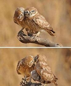 来亲一个!不要!亲一个嘛!好吧!亲一个!