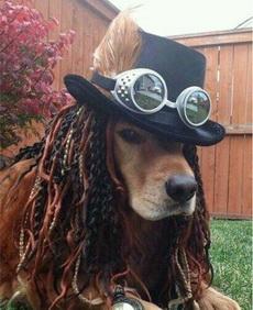 海盗船长汪