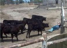到底是哪头大黑牛把我家范冰冰抢走了?