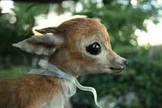 楚楚动人的小鹿