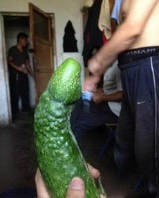 黄瓜都进化了