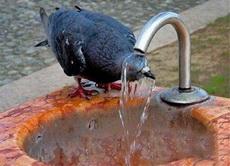 这天热的。先洗个头