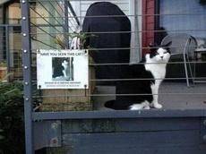 寻猫启事!