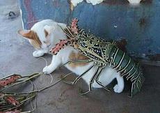 喵,看喵的龙鳞披甲!装逼值999999999