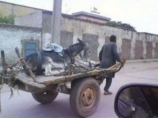 驴子的逆袭