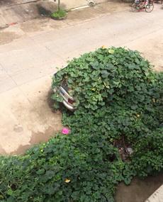 这车,你在躲猫猫吗?