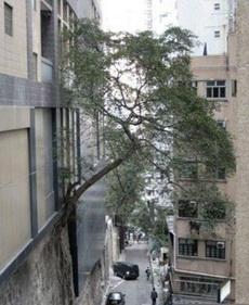 这是不是一棵神树