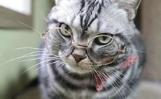被一只猫給撩到了