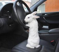 今天我来开车