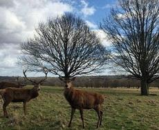 据说,鹿是靠鹿角辨认族群中的地位