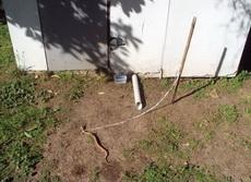 重大创新:看门蛇!