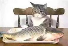 心有鱼,而力不足