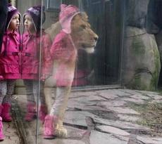 這獅子穿著還挺帥的嘛