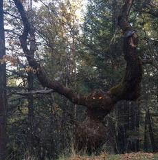 给树贴了一双眼睛,风格都变了