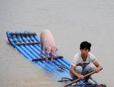 少年和他的pig的漂流記