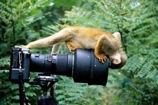 猴哥要来张自拍照么?