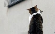 猫哥,妹真的喜欢你哟