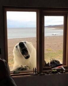 你有本事开窗啊。