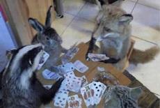 喜欢玩扑克