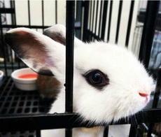 这只兔子颜值简直了!