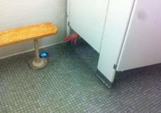 厕所里的绝望之一:它就在那里