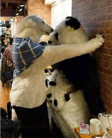 北极熊,你想干什么