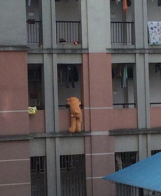 警察蜀黍,就是那只熊,它爬女生宿舍!
