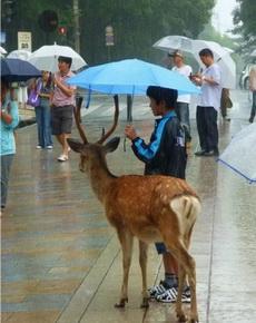 小哥哥为它撑起了一把伞