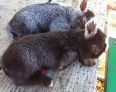 让你们看看什么是真正的小毛驴!