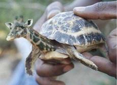 在海边抓到的乌龟,咦,有点不对啊!