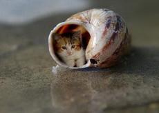 蜗居的小喵