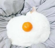缩小了是煎蛋,放大了是猫咪与橙子