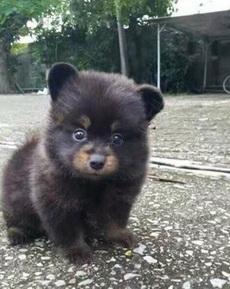 你是狗,长个熊样
