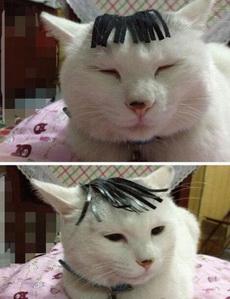 本喵的秀发就是这么的飘逸