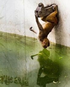 亲,你介是猴子捞月吗?
