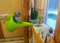 猫是水做的