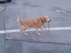 單身狗自己溜自己