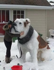 国外网友堆雪人的实力已经达到了十级标准